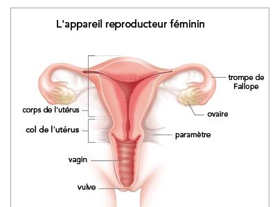 Les douleurs la vulve, au prine et au vagin